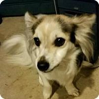 Adopt A Pet :: Jager - Georgetown, KY