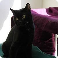 Adopt A Pet :: Dewie - Greensboro, NC