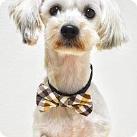 Adopt A Pet :: Biscuit - Dublin, CA