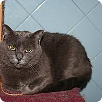 Adopt A Pet :: Shannon - Santa Rosa, CA