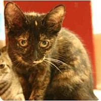 Adopt A Pet :: Taffy - Jenkintown, PA