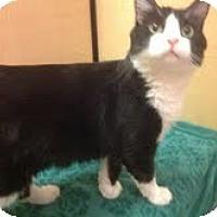Adopt A Pet :: Mamas - Modesto, CA