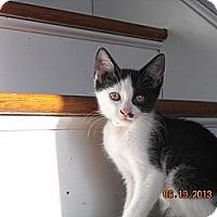 Adopt A Pet :: Lincoln - Riverside, RI