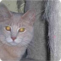 Adopt A Pet :: Princess Adeline - Lombard, IL