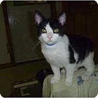 Adopt A Pet :: Chester - Hamburg, NY