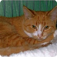 Adopt A Pet :: Troy - Medway, MA