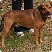 Adopt A Pet :: Henry - Alpharetta, GA