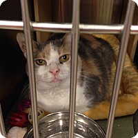 Adopt A Pet :: Daisy - Muncie, IN