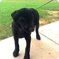 Adopt A Pet :: Tom - Stamford, CT