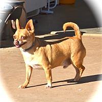 Adopt A Pet :: Corky - Blanchard, OK