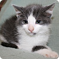 Adopt A Pet :: O'Malley - Jefferson, NC