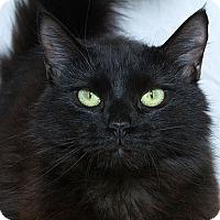 Adopt A Pet :: Lana L - Sacramento, CA