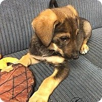 Adopt A Pet :: Grace - mooresville, IN