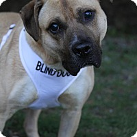 Adopt A Pet :: Mombo - Wayne, NJ