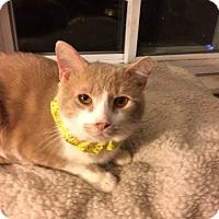 Adopt A Pet :: Austin - Delmont, PA