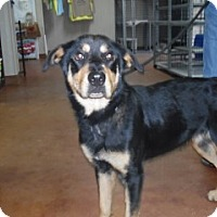 Adopt A Pet :: Morgan - Clarksville, AR