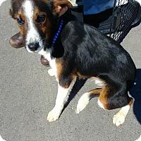 Adopt A Pet :: Skyler - Cincinnati, OH