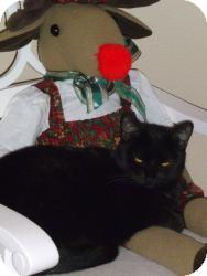 Domestic Shorthair Cat for adoption in Prescott, Arizona - Miss Camille