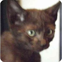 Adopt A Pet :: Kiki - Kensington, MD