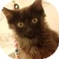 Adopt A Pet :: Chander - Vancouver, BC