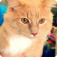 Adopt A Pet :: Bowie - Green Bay, WI