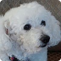 Adopt A Pet :: Charlotte - La Costa, CA