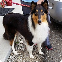 Adopt A Pet :: Diesel - Somers, CT