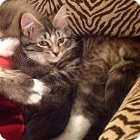Adopt A Pet :: ANA - Hamilton, NJ