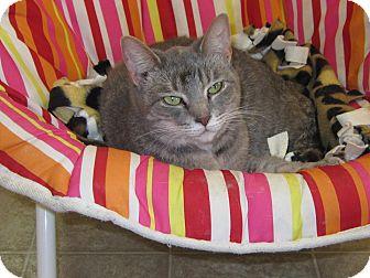 Domestic Mediumhair Cat for adoption in Toledo, Ohio - Martini