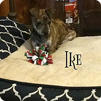 Adopt A Pet :: Ike - Broken Arrow, OK