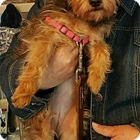 Adopt A Pet :: Tinkerbell - Alhambra, CA