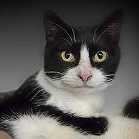 Adopt A Pet :: Jacqueline - Belton, MO
