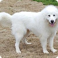 Adopt A Pet :: Clara - E. Greenwhich, RI