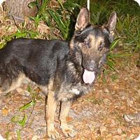 Adopt A Pet :: Don - Riverview, FL