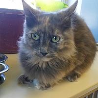Adopt A Pet :: Hazel - Indianola, IA