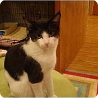 Adopt A Pet :: Timothy--PETSMART - Muncie, IN