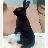 Adopt A Pet :: Jade - Williston, FL