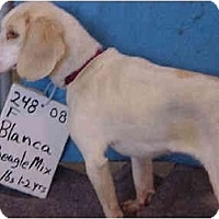 Adopt A Pet :: Blanca/Adopted! - Zanesville, OH