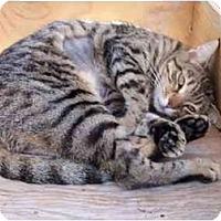 Adopt A Pet :: Ylang Ylang - El Cajon, CA