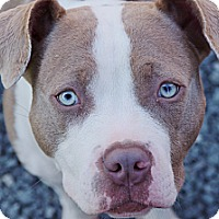 Adopt A Pet :: Sky - Reisterstown, MD