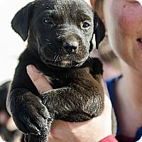 Adopt A Pet :: Zelda - Cumming, GA