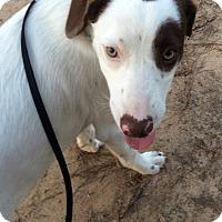 Adopt A Pet :: Maddie - Kingwood, TX