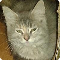 Adopt A Pet :: Dutchess - Whittier, CA