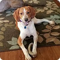 Adopt A Pet :: Maisey - Fredericksburg, VA