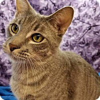 Adopt A Pet :: James - Lombard, IL