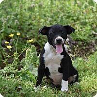 Adopt A Pet :: Harmony - Groton, MA