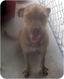 Terrier (Unknown Type, Small)/Labrador Retriever Mix Dog for adoption in Riverside, California - JoJo