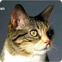 Adopt A Pet :: Kirsten - AUSTIN, TX