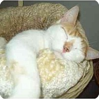Adopt A Pet :: TEXAS - Little Neck, NY