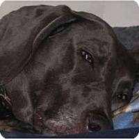 Adopt A Pet :: Maci - Attica, NY